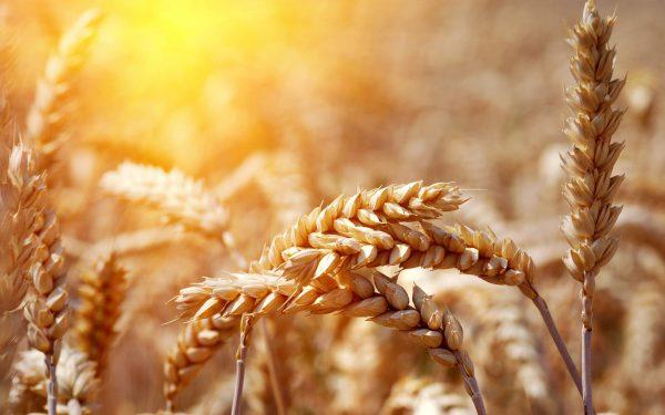 cereali intergrali vivere più a lungo