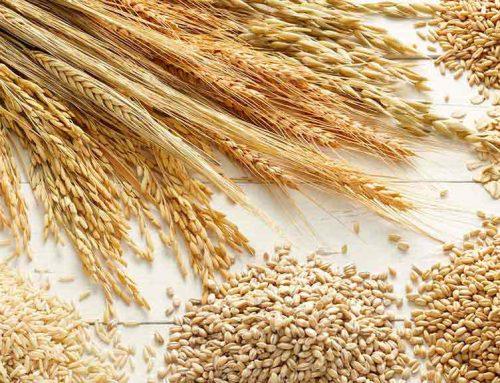 5 ragioni per nutrire tuo figlio con i cereali integrali