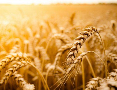 I cereali integrali fanno bene al colon