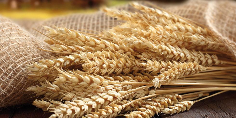 cereali biologici azienda agricola le barbarighe san martino di venezze