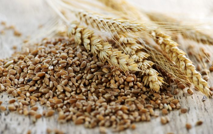 cereali biologici barbarighe