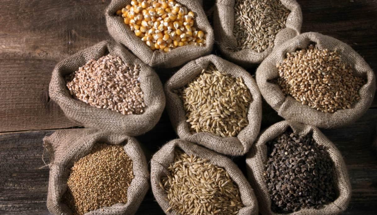 cereali biologici azienda agricola le barbarighe